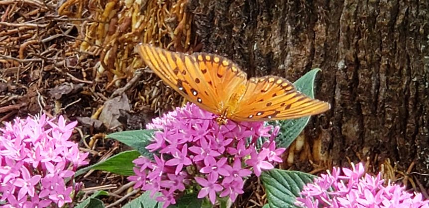 Tery Spataro Butterfly Garden